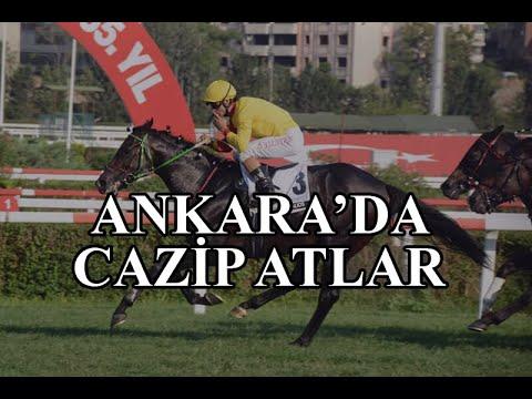 ( CAZİP ATLAR)