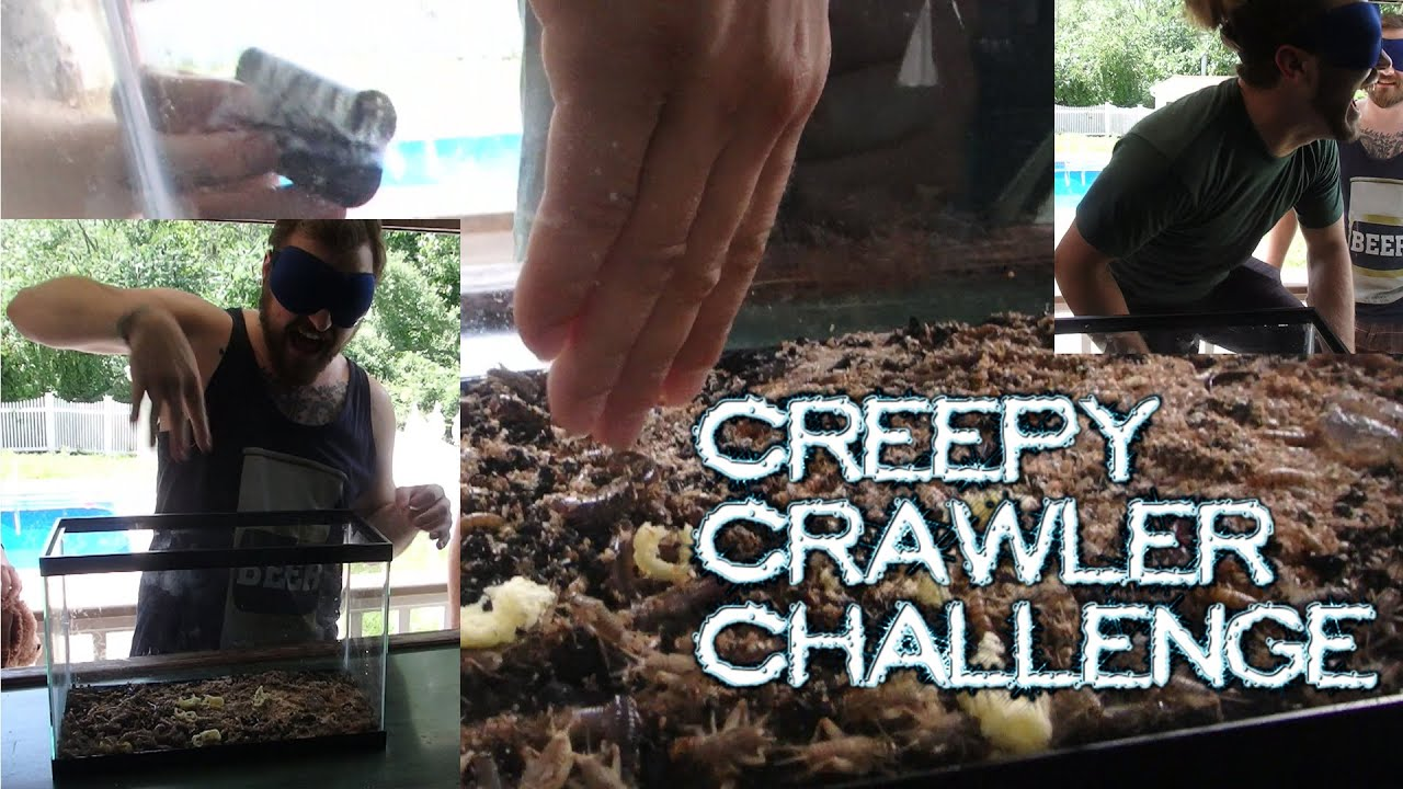 Hilarious Creepy Crawlers Blindfold Challenge
