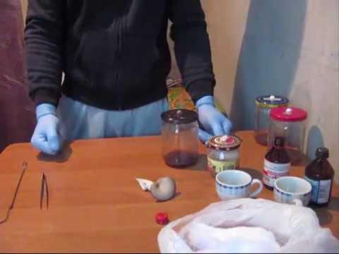 маточный мицелий (вешенка)