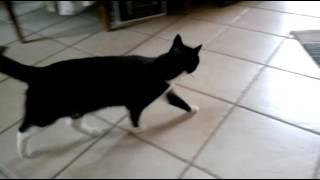 Katze holt Maus zurück