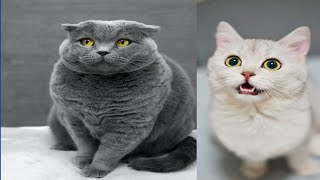Funny cat compilation, cat videos and pictures funny animal video funny fails,qute cat videos,