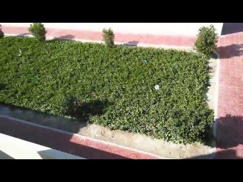 Qatar flower garden