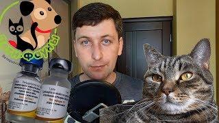 Зачем вакцинировать собаку (кошку) каждый год? Ведь человеку не делают так часто прививки