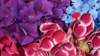 Jane Monheit : Rainbow Connection