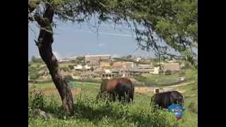 Nkandla residents hurt by the Presidents homestead splurge