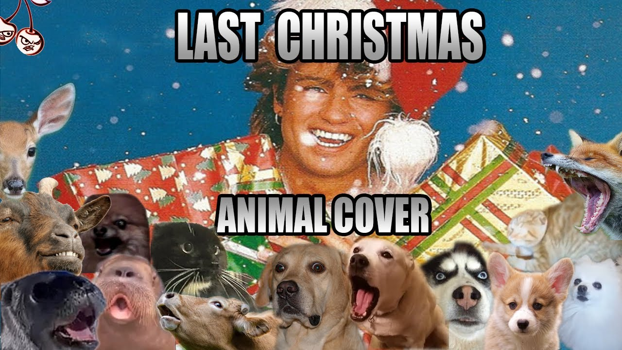 Wham! - Last Christmas (Animal Cover)