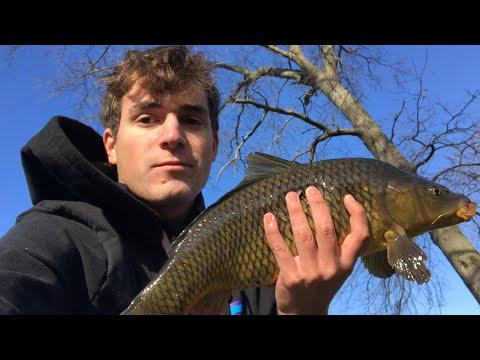 INTENSE Sight Fishing For Winter CARP! +(NEW SPECIES) Long Island, NY