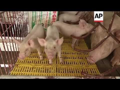 Pork excess in Vietnam as China blocks imports