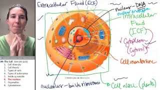Cell 6- Nucleus