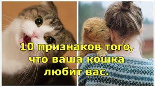10 признаков того, что ваша кошка любит вас.