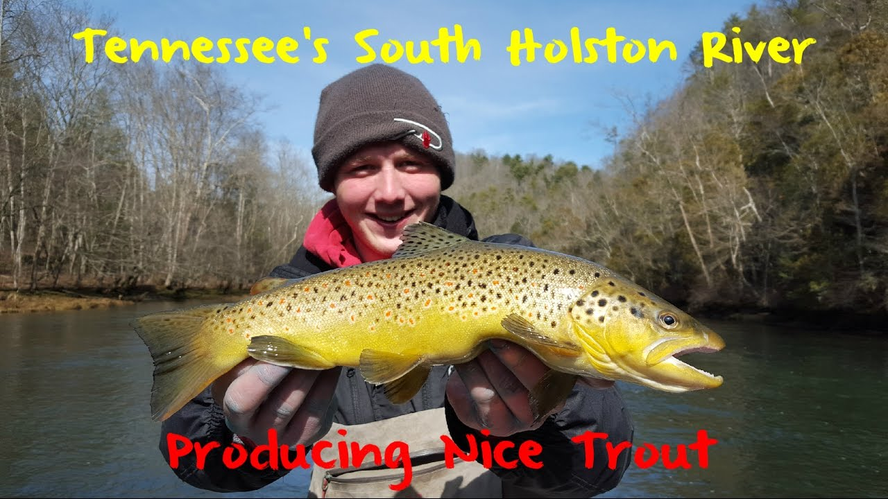 Trout Fishing Tennessee's Holston River