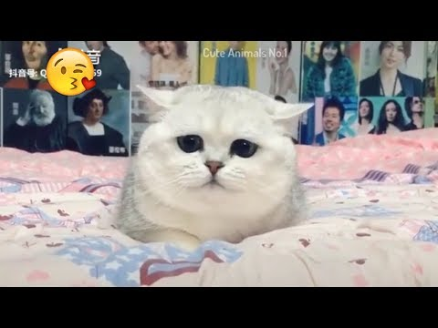 Tiktok Cat - Tik Tok Funny Cat - Cute Cat Videos Compilation 2019 #6 😻 Adorable Cats