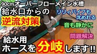 【アクアリウム】問題解決?給水用ホース分岐します!『逆流対策』 thumbnail