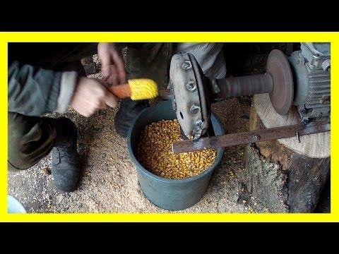 Как отделить семена кукурузы от початка