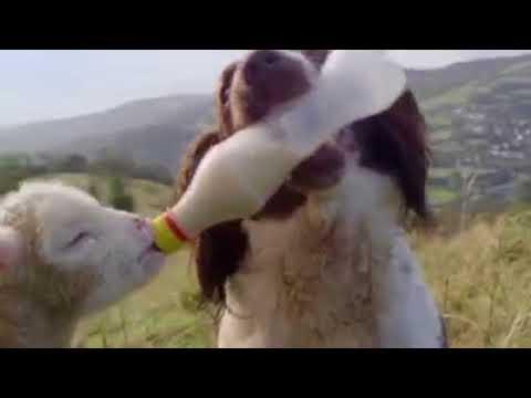 fantastic animals Around the World