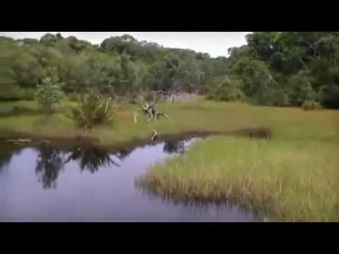 Gabon Tours Video