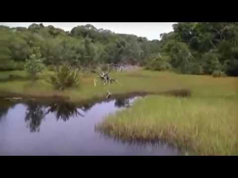 Gabon Tours Video