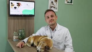 Vídeocase | Problemas da Tireóide em pets | Produzido pela MADÍ Comunicação
