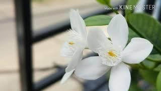 Video RIZKY FEBIAN - Kesempurnaan Cinta (Lyric Vodio) download MP3, 3GP, MP4, WEBM, AVI, FLV Mei 2018
