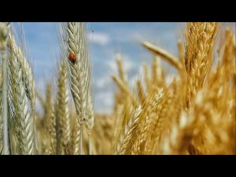 Fields of Gold (Eva Cassidy version)