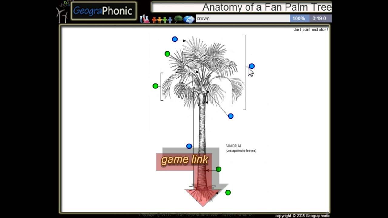 Anatomia di un Palma nana, tronco, picciolo, corona, depliant ...