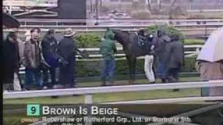 Starburst Racing Stables- Brown Is Beige 11-20-11