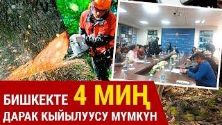 Бишкекте 4 миң дарактын кыйылуусу мүмкүн деген маселе талкууланды