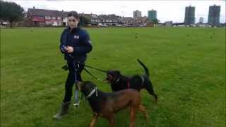 Elite Dog Training - Spending Quality Time With My Own Dogs!