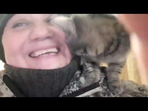 Новый вид хендмейда: Котобукет 300 кошек.New handmade🐾 БФ Лохматая Душа