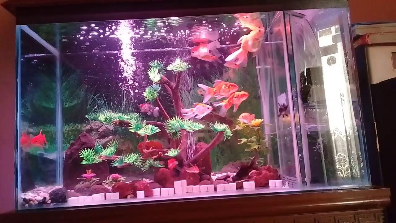 55+ Foto Desain Aquarium Filter Samping Gratis Terbaik Yang Bisa Anda Tiru