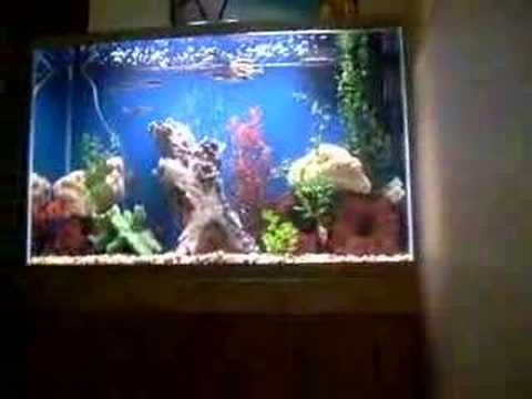 Shakes 50 gallon high fish tank youtube for 50 gallon fish tank dimensions
