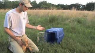 The Wildrose Way: Training Ms Maizie - Intro To Hurry And Kennel