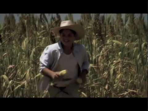 Malas Fronteras- Trailer Cinelatino