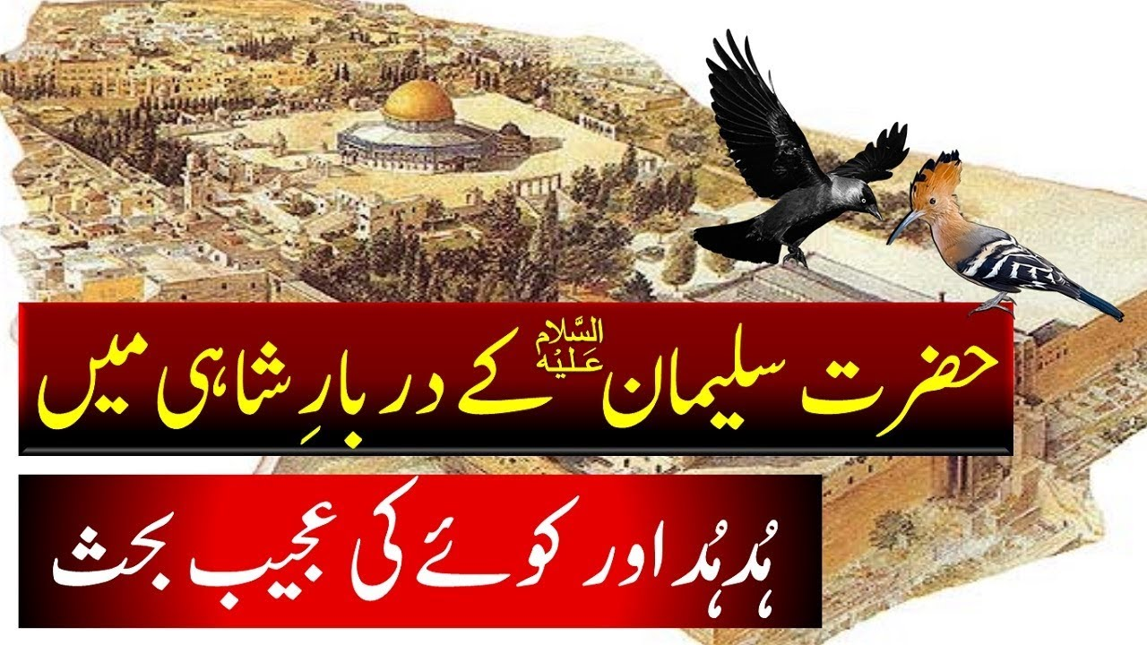 Download Hazrat Suleman AS and Hoopoe Bird || Hud Hud || Crow || Solomon in Islam ||हुदहुद