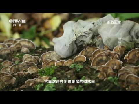 走近科学  创新中国 蘑菇工厂