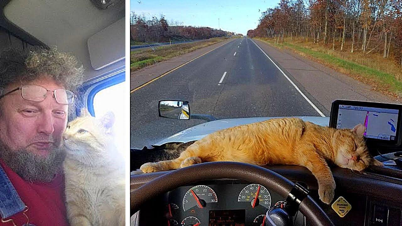 Einsamer LKW Fahrer adoptiert streunende Katze...