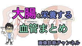 【まとめ】大腸(結腸・直腸)を栄養する血管(動脈)!