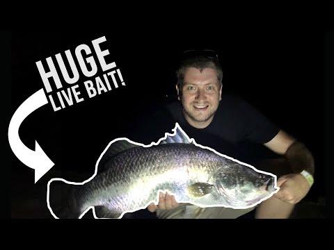 I Caught My Dream Fish! How I Caught 3 Huge Barramundi in One Night!