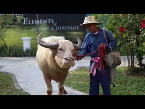 Travel Guide Hotels in Chiang Mai, Thailand The Dhara Dhevi
