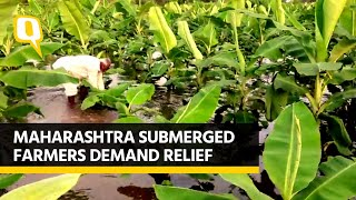 Maharashtra: Farms Flooded, Crops Wasted, Farmers Seek Govt Relief | The Quint