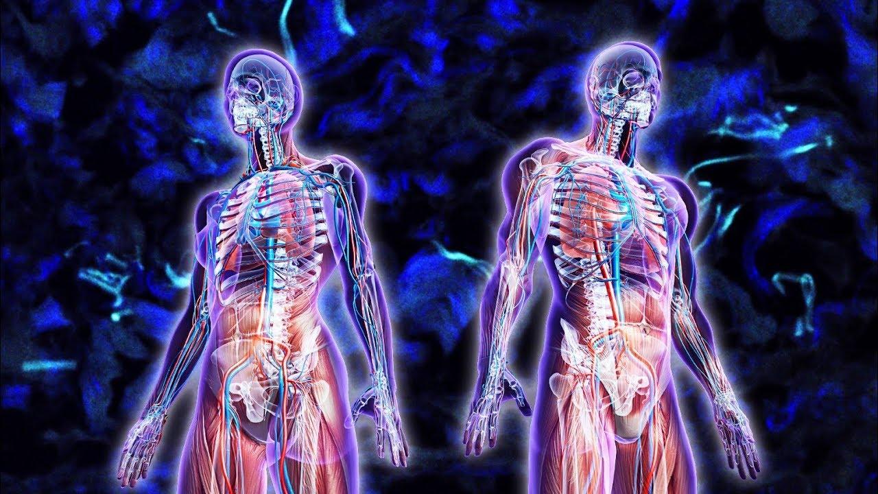 Descubren un Nuevo Órgano en el Cuerpo Humano - YouTube