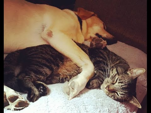 Cat Snuggling With Dreaming Dog