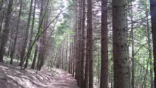 Nature Sounds Forest Sounds Relaxing Sound