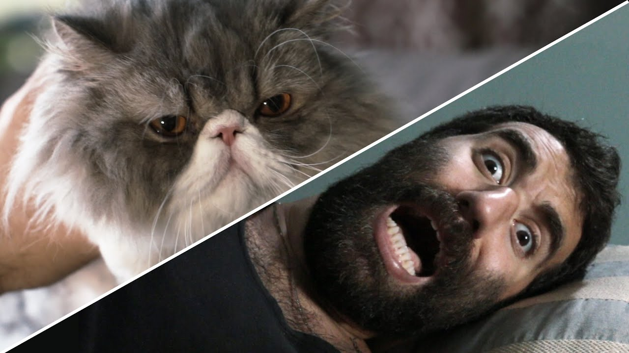 how to scare male cats away