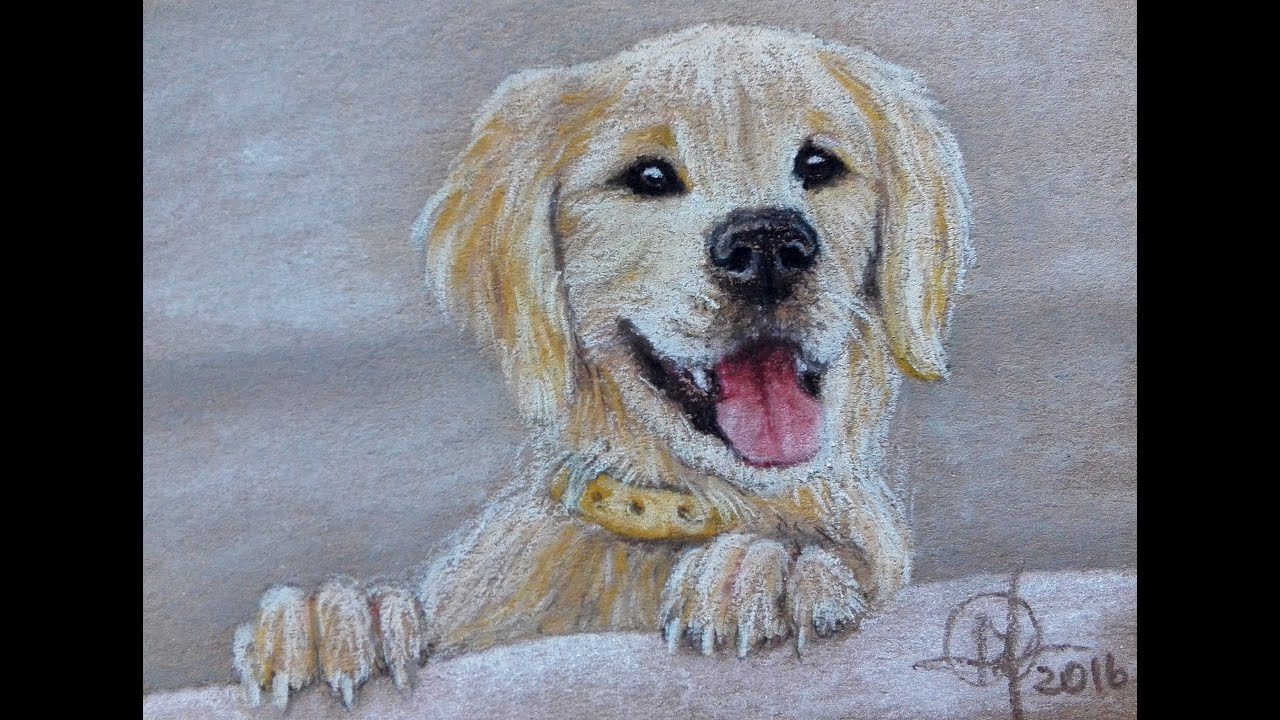 drawing a dog with pastel pencils youtube