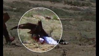 Момент нападения беркутом на 8-летнюю девочку на Иссык-Куле
