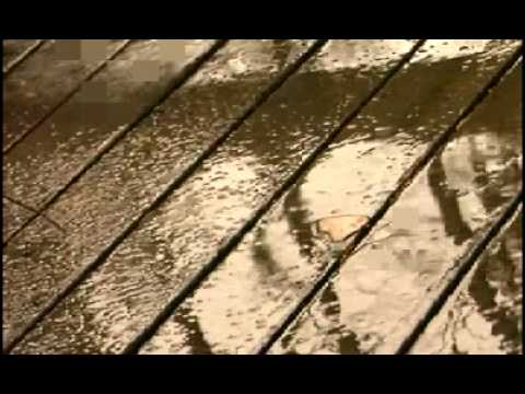 Kenny Wayne Shepherd - Everytime It Rains