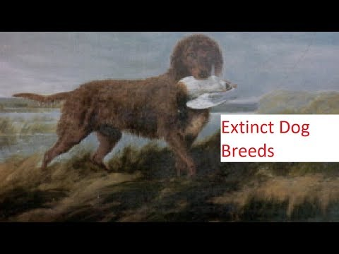 7 Extinct Dog Breeds you Have Never Heard Of