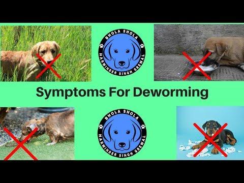 Pet Care - Symptoms For Deworming - Bhola Shola