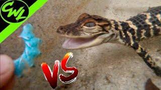 alligator-vs-giant-worm